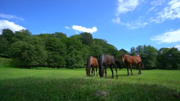 Divocí koně na louce. Zelená tráva a krásná zvířata. Hřebci cválající na divokou přírodu. Na louce se pasou koně a jedí trávu. Slunečný letní den. Modrá obloha s mraky