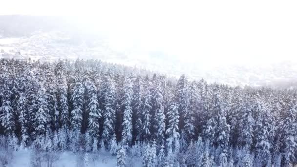 Zimní jehličnatého lesa. Letecký pohled