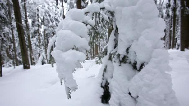 Zasněžené jehličnatého lesa. Dolly zastřelen. Zpomalený pohyb. Detailní záběr