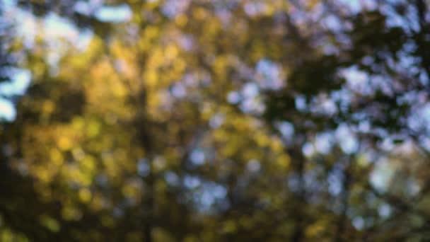 Homályos levelek a szélben hajladozó fák