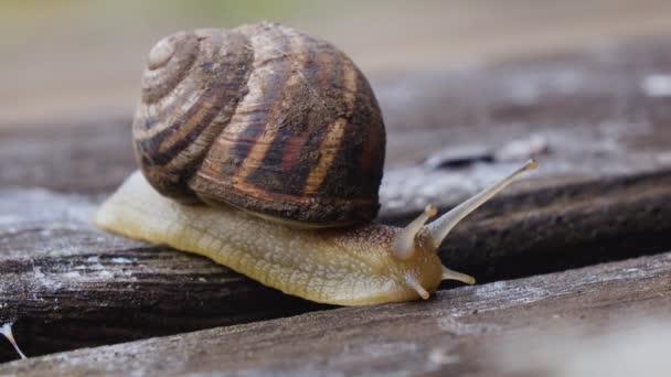 Macro of beautiful snail crawling in nature. Close up