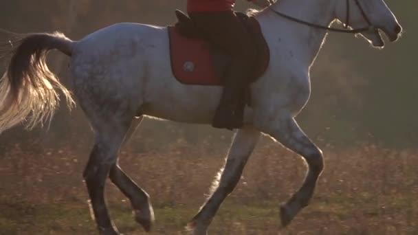 Dívka na koni na jejich koně přes louku. Zpomalený pohyb