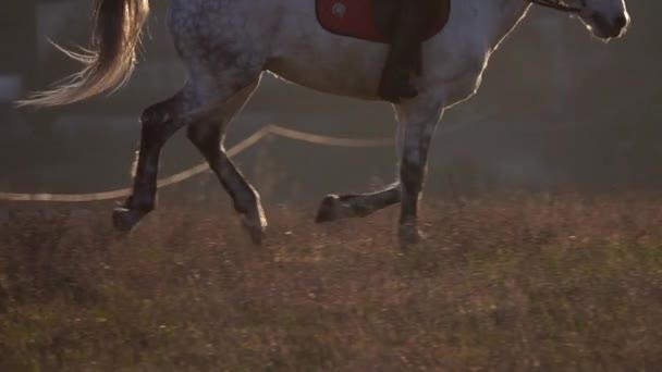 Koňských kopyt cval na koni jezdkyně. Zpomalený pohyb. Zblízka. Boční pohled