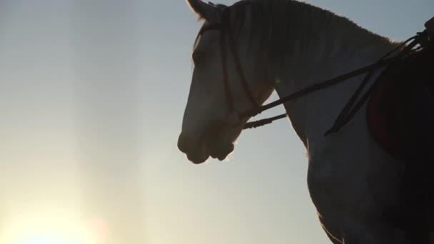 Nahaufnahme von Pferden Maulkorb gegen den blauen Himmel. Zeitlupe. Nahaufnahme