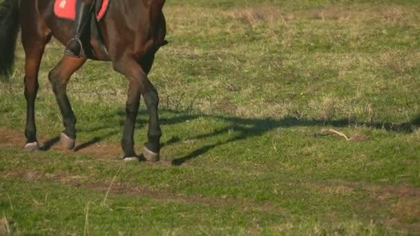 Kopyta koně tryskem přes zelené pole. Zpomalený pohyb. Detailní záběr