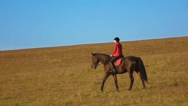 Samice jezdce na koních silný silný hnědý hřebec koně. Zpomalený pohyb