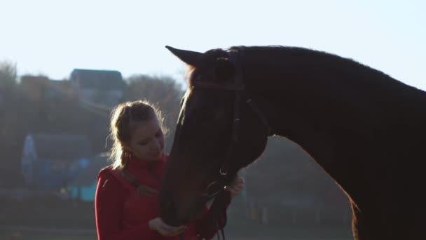 Mädchen mit einer Hand füttert ein Pferd und hält es aus gutem Grund. Zeitlupe