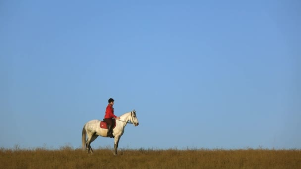 Girl riding a horse strokes a white horse standing in the field. Slow motion. Side view