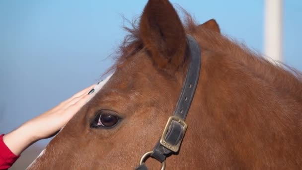 Girls hands throw a bridle on his horse. Slow motion. Close up