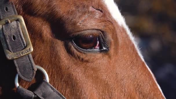Horse eye close up. Slow motion