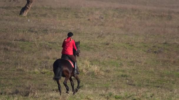 Rider galloping on a green field on horseback. Back view. Slow motion