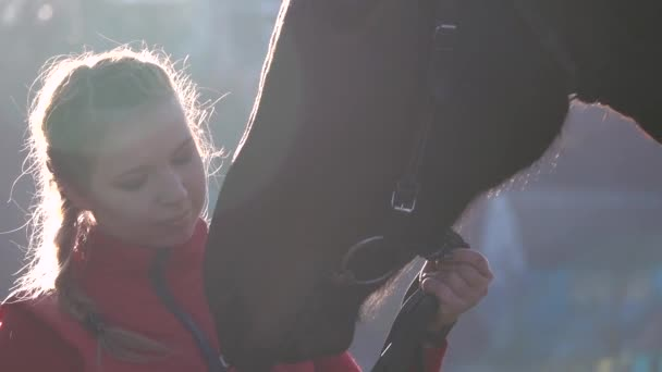 Girl with a hand feeds a horse and holds it for a reason . Slow motion.Close up
