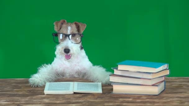 Iskolai könyvek kutya. Zöld képernyő