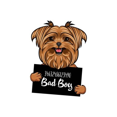 Yorkshire terrier Bad boy. Dog prison. Yorkshire terrier criminal. Arrest photo. Vector.