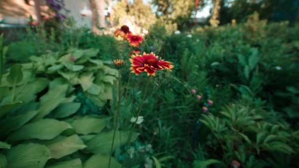 Time lapse. Flower in the garden. Beautiful blooming flower.