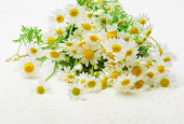 Bouquet of white daisy flowers