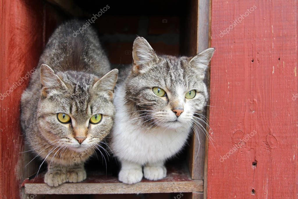 Two stray cats siting together on the street