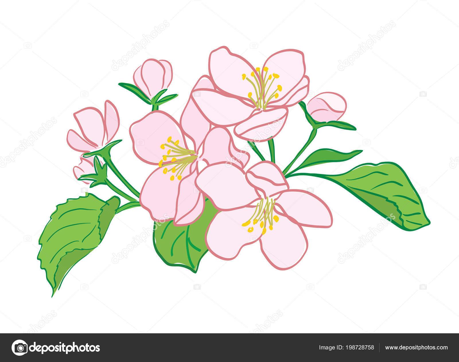 Цветок похожий на калла