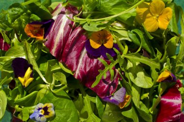 Healthy vegan, vegetarian salad with flowers and lots of greens