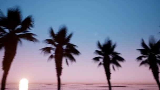 Pohyb kamery v blízkosti avenue palm stromy Podsada