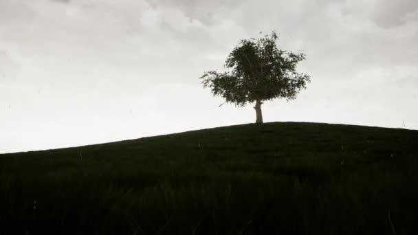 Un timelapse mostrando un grande albero durante le 4 stagioni di Meteo