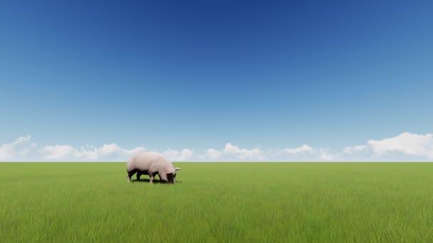 Prase na zelené travnaté hřiště