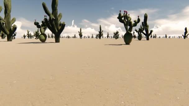 Ccacti a sivatagban, a por háttér. Sivatagi táj. Természet tájkép.