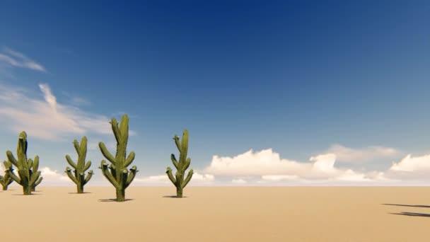 Ccacti a sivatagban, a por háttér. Sivatagi táj. Természet tájkép. 4k