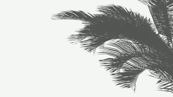 Imbolygott pálmalevél sziluettek a szél felvételeket. Kókuszpálmafa árnyék szigeten strand homok. Trópusi fronds a tengeri szellő valósághű animáció. Exotikus közelről hagy izolált szürke