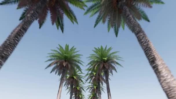 Palmenallee Sommer tropisches Blatt. Sommerliche Naturlandschaft. Paradiesische Natur. Landschaft im Freien.
