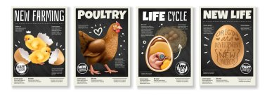 Chicken Realistic Posters Set