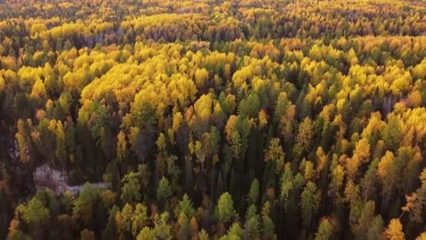 Vrchol dolů, podzimní dřevo. Přírodní pozadí. Letecký pohled shora na podzimní les s pestrobarevnými stromy, jasně žluté, červené listy