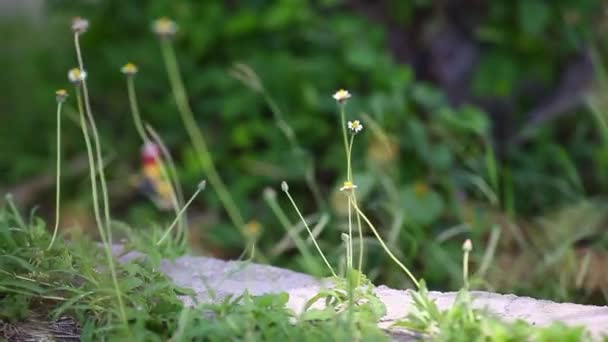 nature of grass flowers