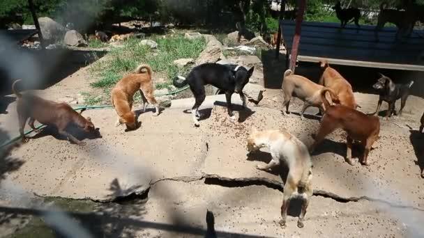 Obdachlose Hunde bellen im Tierheim, arm und hungrig