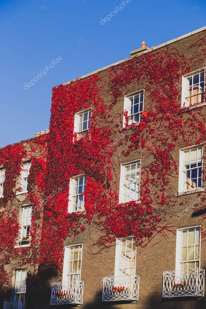 DUBLIN, IRELAND - October 6th, 2018: buiildings covered by red ivy leaves in Dublin city centre