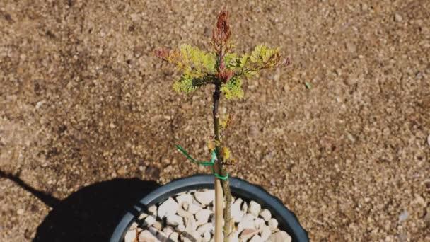 környezetvédelem koncepció kezek óvatosan környező kis levelek nő egy kis fa körül száraz föld