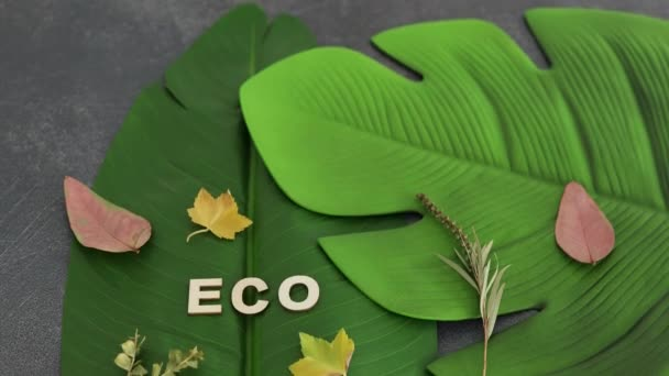 ecology and respect for the environemnt conceptual still-life, Eco text on top of  tropical banana and monstera leaves, camera panning vertically