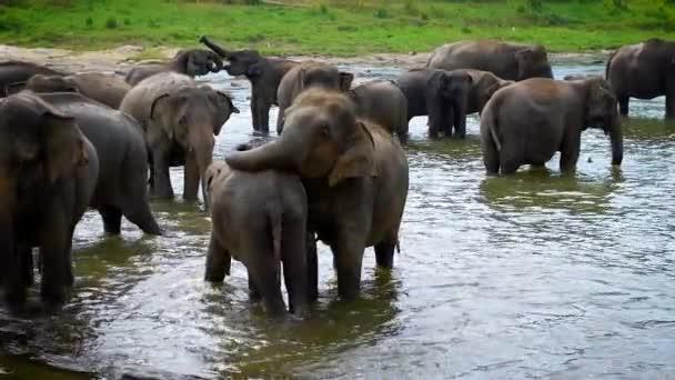 Herde indischer Elefanten im Wasserloch