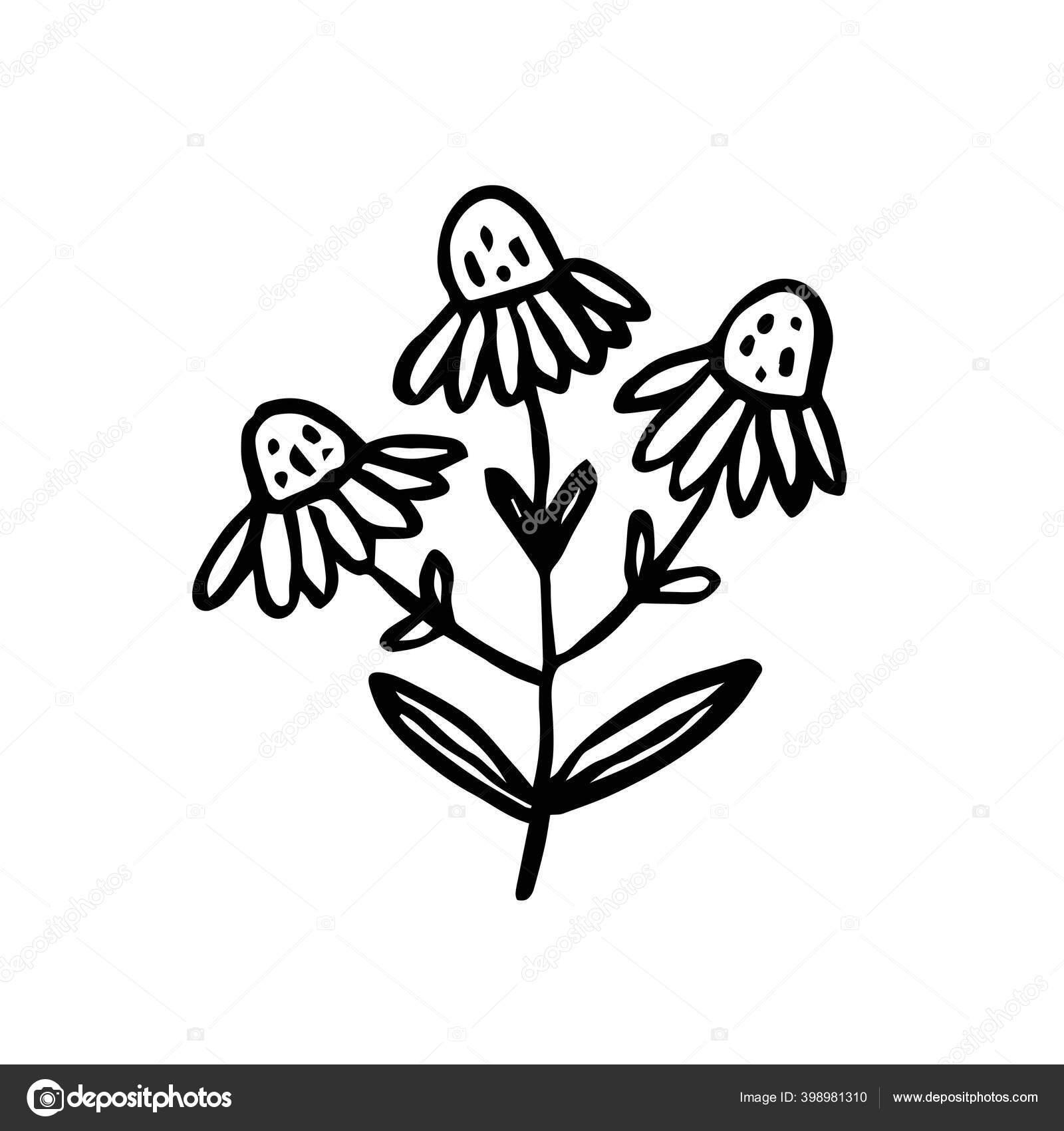 Herbal Tinta Tanaman Warna Hitam Ilustrasi Vektor Diisolasi Pada Latar Stok Vektor C Fox Biz 398981310