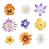 Akvarell tavaszi virágok, egy üres hátteret elszigetelt