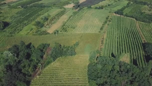 Amazing aerial view of nature with green plantation