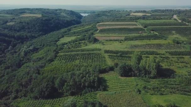 Csodálatos a légi felvétel a természet zöld ültetvény