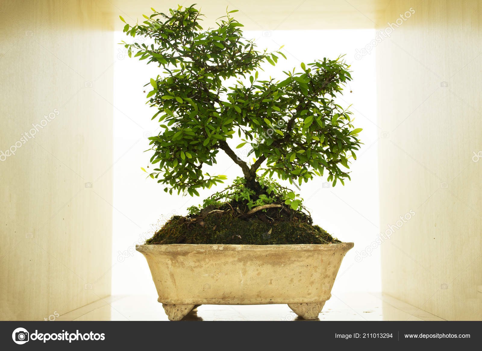 Diy Small Garden Little Tree Bonsai Show Sale Workshop Thailand Stock Photo C Anirut 211013294