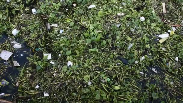 eichhornia crassipes oder Gewöhnliche Wasserhyazinthe und viel Müll auf der Wasseroberfläche des Choa Praya Flusses in Bangkok, Thailand