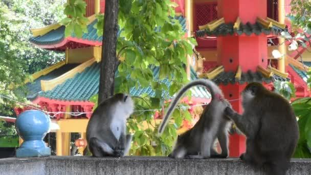 Majmok játszanak és esznek területén Wat Tham Sua Krabi, Thaiföld