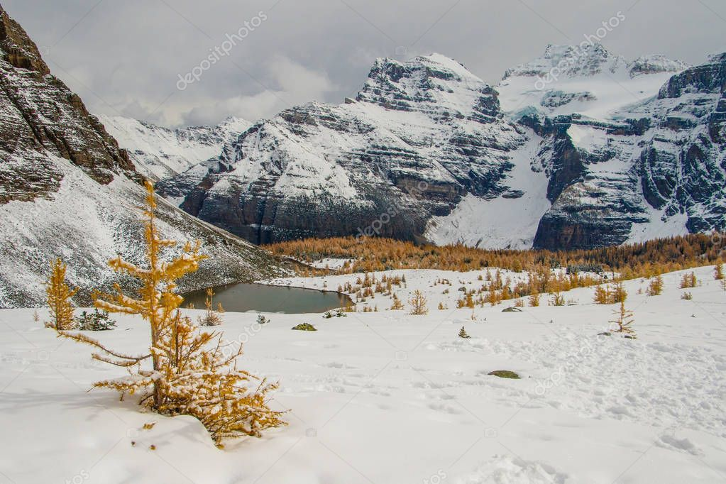 Fresh snow in September in Larch valley, Banff np, famous hiking trail in canadian rockies, autumn season photography