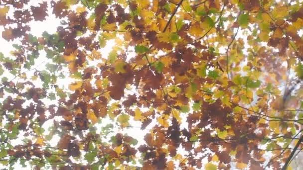 Podzimní listí v mlhavém lese