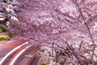 Locus of Tokyo Midtown cherry and car headlights