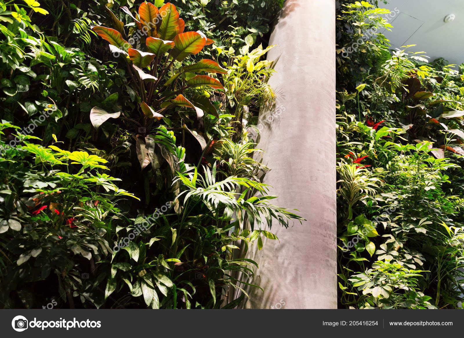 Giardino verticale casa vivono parete verde con fiori piante sotto foto stock josekube - Giardino verticale in casa ...
