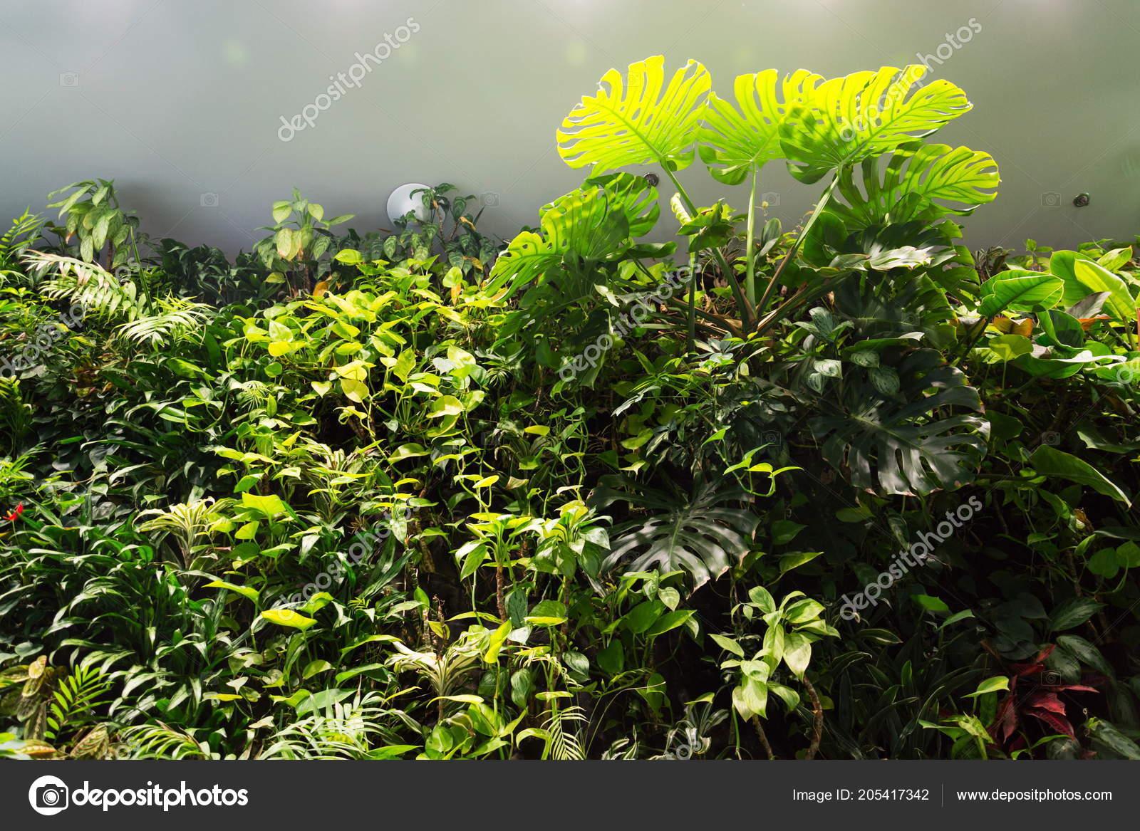 Giardino verticale casa vivono parete verde con fiori piante sotto